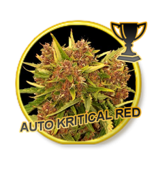 AUTO KRITICAL RED - 3 Semilla Autoflorecientes.