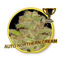 AUTO NORTHERN CREAM - 3 Semillas Autofloreciente.